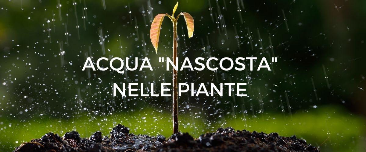acqua-piante-banner